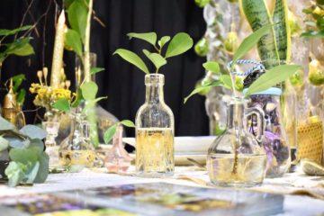 Wodna Hodowla Roślin: Aqua Wiecha; Cieszyńskie na obcasach