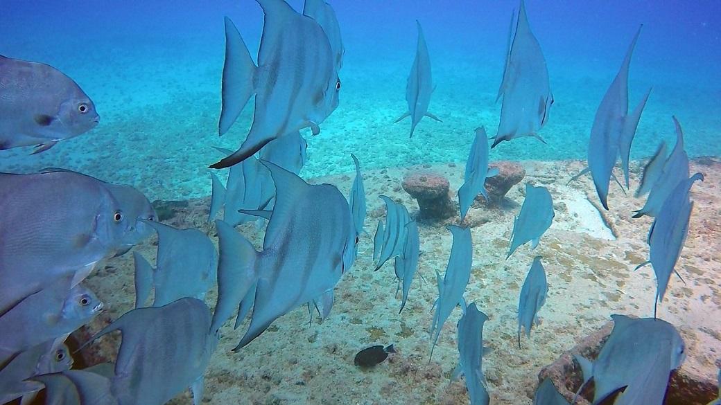 błekitne ryby pływające w oceanie