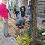 usuwanie płyt chodnikowych i sadzenie zieleni