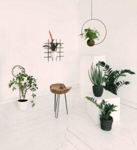 Nie stawiajmy roślin na parapetach